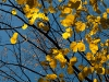 herbst_in_goeteborg-0584