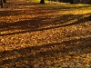 herbst_in_goeteborg-0594